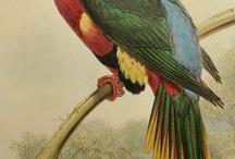 BIRDS PARROT TOUCAN