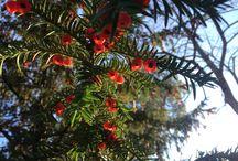 Le piante del Castagnolino - Plants in Castagnolino
