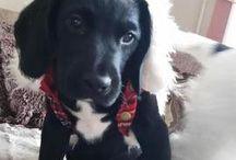 Dogs, puppies & treats