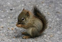 Schattige eekhoorns♡
