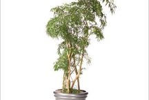 Planter av generell interesse / potteplanter
