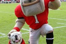 Bulldogs / by Jennifer Dockrey