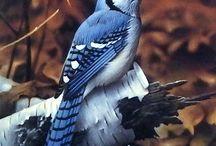 Πουλιά Birds