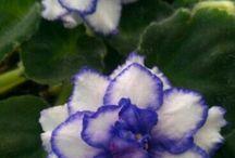 Bloomin' Petals