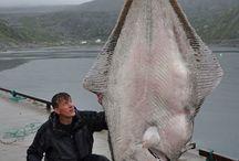 Pesca & Caccia