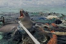 STOP Plastic Pollution / by SimplyStraws