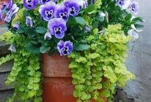 piante da giatdino