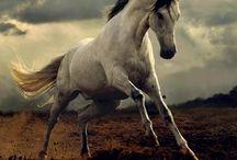 Horses / by MJ Thompson