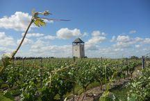 Oenotourisme en Anjou / Balades et randonnées sur le thème de la vigne et des vins en Anjou