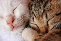 cuddlies.....awwwwww..... / by vliepins {capturing everyday life...}