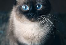 Katter / Cats