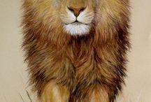 #aslanburcum