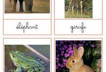 Cartes de nomenclatures Montessori / Montessori : cartes de nomenclatures