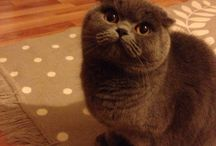 Duman / Cat