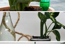 astus plantes