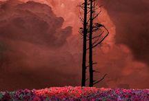 Natureza I