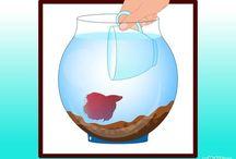•FISH/FISHTANKS•