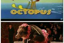 octopus bear