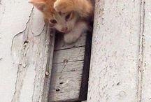 Adorable kittens - love them