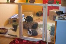 Rabbit Housing - Indoor / The Warren fosters and rehomes bunnies for the RSPCA and privately. We have a strict criteria when it comes to space and housing.  We do not recommend that house bunnies are confined to a pet shop type cage, as they do not offer enough space, and would prefer they had a pen or sectioned off area in the house.  This way they can be contained when you are out but still have space to hop around.