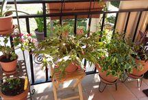 Mis plantas / En casa y alrededor
