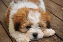 Cute as puppies