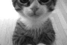 Cute animals pic
