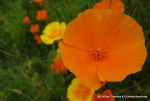 #LundiFleuri / Le #LundiFleuri est un rendez-vous hebdomadaire des amateurs de nature et de fleurs (et de ceux qui n'aiment pas le lundi ^^). Plus d'infos : https://petitesevasionsgrandesaventures.fr/2016/08/22/lundifleuri/