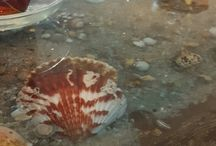 sea table