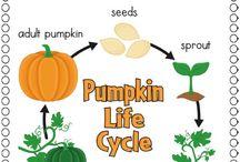 life cycle / yaşam döngüsü