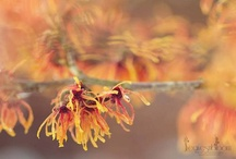 Winter Flowers & Photography / Interest in your garden throughout the wintertime