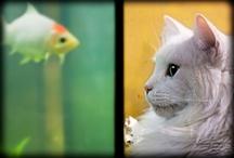Cats and Aquariums