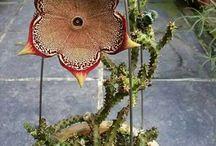 Virágok, kerti növények, szoba növények / Kaspók cserepek és virág polcok