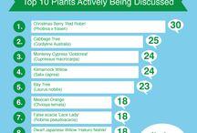 Gardening&Media&Phenomenon