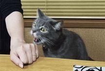 Legrační Kočky
