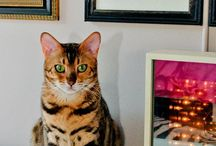 Cattitude / We know how much you love your feline family! Here you'll find smart tips and inspiring, cat-focused pins to help you be the best pet parent you can be.  We can also help protect your family cat with Farmers Pet Insurance provided by Pets Best. Learn more at farmers.petsbest.com.