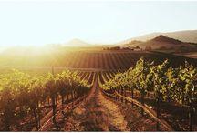 Love to wine:) / by Danielle Murtagh
