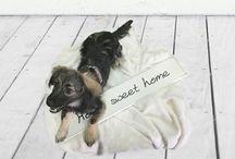 Perros en adopción / Dogs for adoption / Todos estos perros buscan un hogar ¿nos ayudas a encontrarlo? / All these dogs are looking for a home, can you help us to find it?