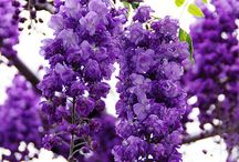 flowers / by Victoria Cassady