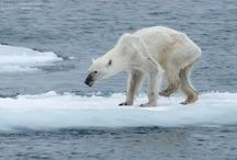 ANIMALS AND GLOBAL WARMING