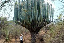 J'ad♥re les Cactus! / L♥ve Cactus!