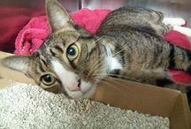 new homes for kitties