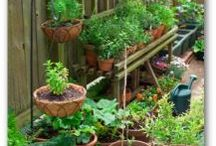 Vegetables in containers / Gardening