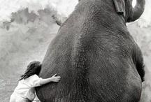 Animals / by Haeli Johnson