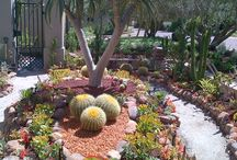 Succlent gardens. / Various succulent garden ideas.