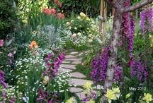 Cottage garden / Flowers