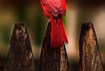 Uccellinicolorati