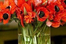 Purty Fleurs / Flowers / by Jill Loy