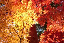Autumn, my favorite season of the year / I love everything fall related.