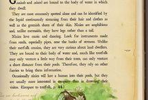 myths, legends and folk tales
